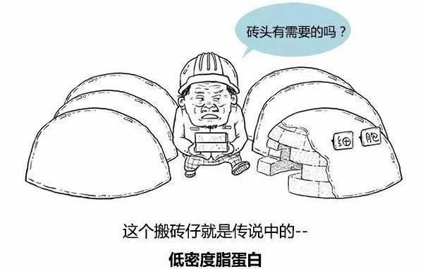 心脑血管:一张漫画看懂粥样硬化 十佳科普漫画