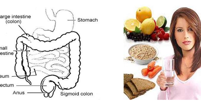 膳食纤维治疗便秘的效果研究进展